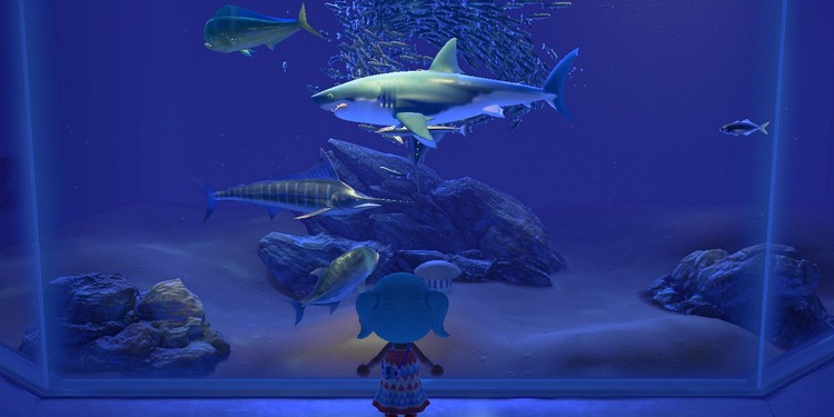 how_to_catch_a_shark_in_animal_crossing_new_horizons_header.jpg