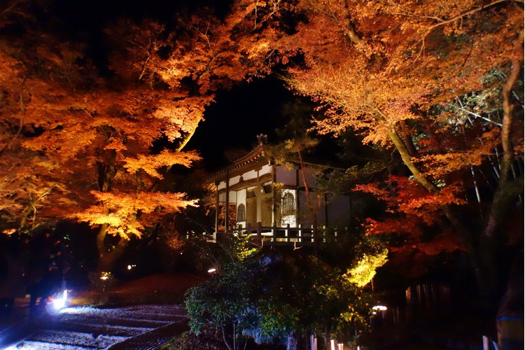 京都枫叶-宝严院.jpg