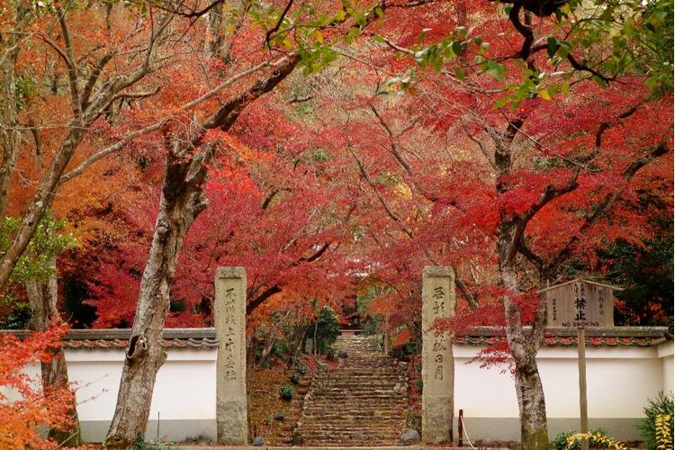 京都枫叶-净住寺.jpg