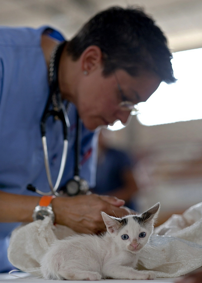 動物醫院獸醫院